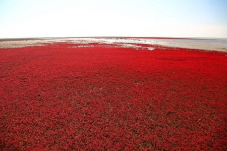 panjin-red-beach-china-9-640x426